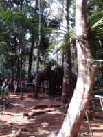 джунгли 1.jpg