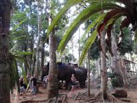джунгли 2.jpg