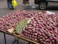 Pабат плоды кактуса.JPG